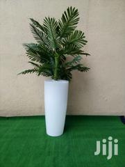 Indoor And Outdoor Potted Tree   Landscaping & Gardening Services for sale in Lagos State, Ikeja