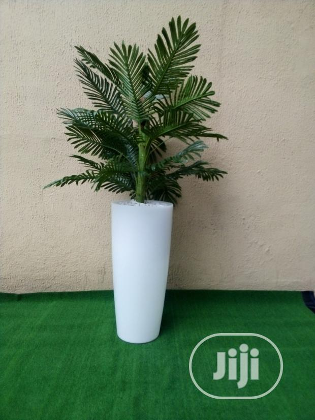 Indoor And Outdoor Potted Tree