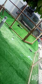 Supplier Of Carpet Grass Nationwide | Landscaping & Gardening Services for sale in Rivers State, Abua/Odual