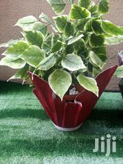 Vase Planter In Nationwide | Landscaping & Gardening Services for sale in Lagos State, Epe