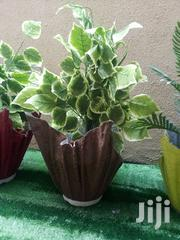 Quality Polymer Cemented Vase Planter For Sale | Home Accessories for sale in Cross River State, Bakassi