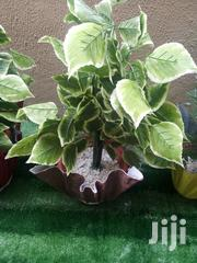 Outdoor Polymer Vase Planter For Sale | Home Accessories for sale in Lagos State, Ikotun/Igando