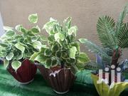 Polymer Vase Used As A Planter | Home Accessories for sale in Lagos State, Ikeja