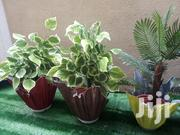 Mini Polymer Vase Planter For Sale | Home Accessories for sale in Lagos State, Ikeja