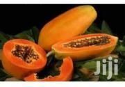Dwarf Red Lady F1 Papaya Seeds | Feeds, Supplements & Seeds for sale in Ogun State, Abeokuta South