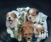 Lhasa Apso Puppies (Male & Female) | Dogs & Puppies for sale in Ekiti State, Ado Ekiti