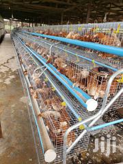 Battery Cage For Layers   Farm Machinery & Equipment for sale in Abuja (FCT) State, Utako
