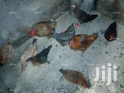 Local Fowl | Livestock & Poultry for sale in Rivers State, Port-Harcourt