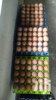 Fresh Eggs | Meals & Drinks for sale in Epe, Lagos State, Nigeria