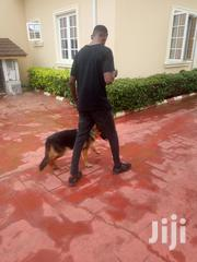 K9 Training Services | Pet Services for sale in Ondo State, Akure
