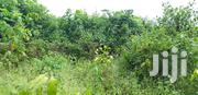 A 100 By 200 Land In A Developing Community For Sale | Land & Plots For Sale for sale in Edo State, Benin City