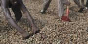 Cashew Nut In Tons | Feeds, Supplements & Seeds for sale in Abuja (FCT) State, Garki 2