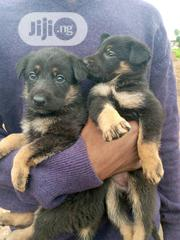 German Shepherd Guard Dog Puppy / Puppies for Sale GSD | Dogs & Puppies for sale in Lagos State, Victoria Island
