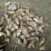 Snails For Rearing And Consumption | Other Animals for sale in Oyo State, Ibadan North