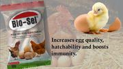 Poultry Feed Supplement | Feeds, Supplements & Seeds for sale in Lagos State, Ojodu