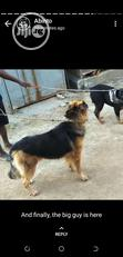 Crossing/Stud Service | Pet Services for sale in Gwagwalada, Abuja (FCT) State, Nigeria