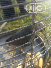 Talking Parrot For Give Away Price | Birds for sale in Kaduna State, Zaria