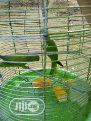 Beautiful Pairs Of Parrots For Sale | Birds for sale in Kaduna State, Zaria