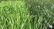 Football Grass | Landscaping & Gardening Services for sale in Lagos State, Ikeja