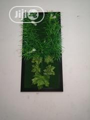 Decorate Your Homes Amd Offices With Green Plant Frame | Garden for sale in Jigawa State, Gumel