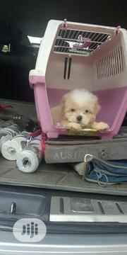 Quality Lhasa Apso Available | Dogs & Puppies for sale in Ogun State, Ado-Odo/Ota