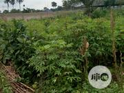 For Sale: Two (2) Plots in Rukpokwu | Land & Plots For Sale for sale in Rivers State, Port-Harcourt