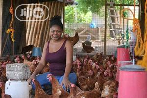 Place Your Order For Broilers Now