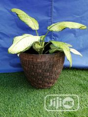 Make Exotic Flowers With Flower Pots Planters   Garden for sale in Osun State, Osogbo