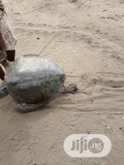 Fresh Sea Turtle | Other Animals for sale in Lagos State, Ojo
