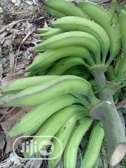 Introducing Giant Elephant Plantain Suckers For Sale | Feeds, Supplements & Seeds for sale in Ogun State, Obafemi-Owode