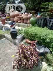 All Kinds Trees, Grasses, Plants, Flowers | Garden for sale in Abuja (FCT) State, Utako