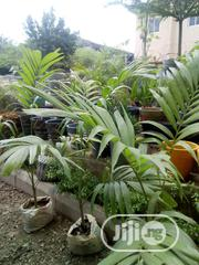 Landscaping Services Nationwide | Garden for sale in Abuja (FCT) State, Utako