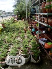 Decorative Flowers For Home, Offices, Etc | Garden for sale in Abuja (FCT) State, Utako