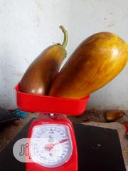 Egg Plant For Sale | Feeds, Supplements & Seeds for sale in Ogun State, Ado-Odo/Ota