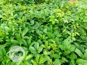 Agric Consultancy And Farm Planting Services | Garden for sale in Ogun State, Ado-Odo/Ota