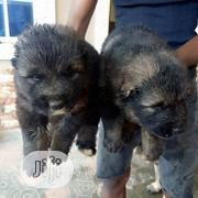 Mountain Caucasian Puppies | Dogs & Puppies for sale in Lagos State, Ojo
