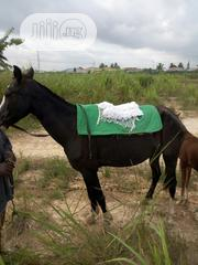Local Horse For Sale | Livestock & Poultry for sale in Ogun State, Obafemi-Owode