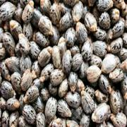 Castor Seeds Organic Castor Seed | Feeds, Supplements & Seeds for sale in Lagos State, Victoria Island