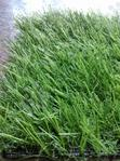 New High Quality & Soft Outdoor/Indoor Artificial Grass. | Garden for sale in Lekki Phase 2, Lagos State, Nigeria