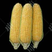 Sweet Corn | Feeds, Supplements & Seeds for sale in Ogun State, Abeokuta South