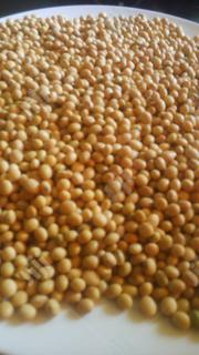 Organic Soybeans (Soya Beans) | Feeds, Supplements & Seeds for sale in Abuja (FCT) State, Kubwa