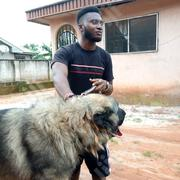 Adult Male Purebred Caucasian Shepherd Dog | Dogs & Puppies for sale in Edo State, Egor
