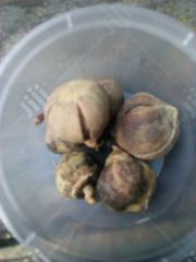 Goron Tula | Feeds, Supplements & Seeds for sale in Rivers State, Port-Harcourt
