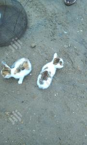 Baby Female Mixed Breed   Cats & Kittens for sale in Lagos State, Ojo