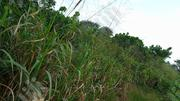 100 Plots for Sale (Farm Land) | Land & Plots For Sale for sale in Imo State, Owerri