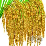 Rice Seed For Planting | Feeds, Supplements & Seeds for sale in Abuja (FCT) State, Kubwa