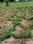 Vegetables | Feeds, Supplements & Seeds for sale in Ipokia, Ogun State, Nigeria