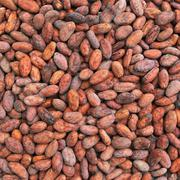 Cocoa Beans For Sale   Feeds, Supplements & Seeds for sale in Ondo State, Ondo East