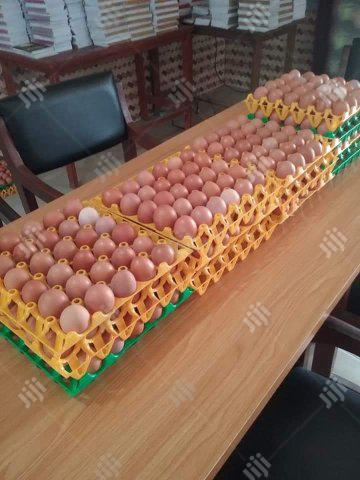 Archive: Farm Fresh Eggs Available For Sales At An Affordable Price