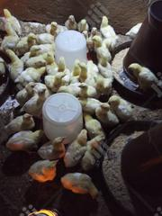 Poultry... | Livestock & Poultry for sale in Ogun State, Abeokuta South